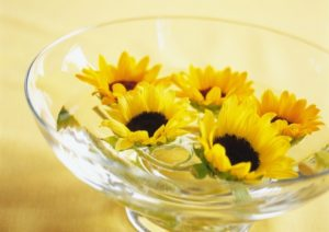 Floating Sunflower in Bowl, High Angle View, Close Up, Differential Focus, In Focus, Out Focus